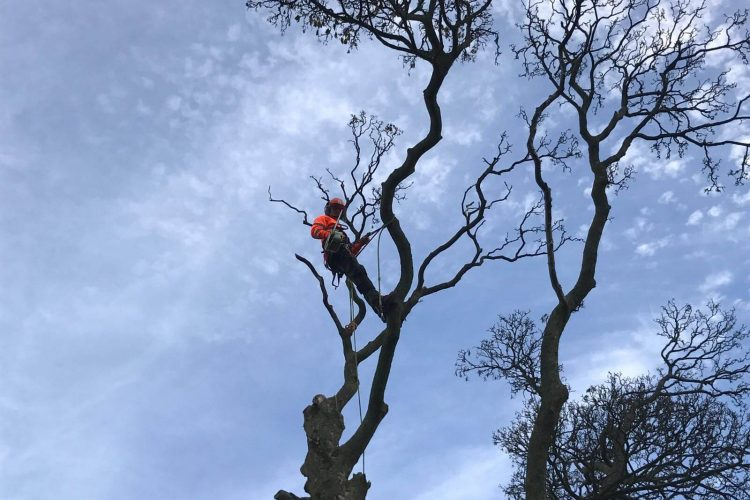 Tree Services Leeds