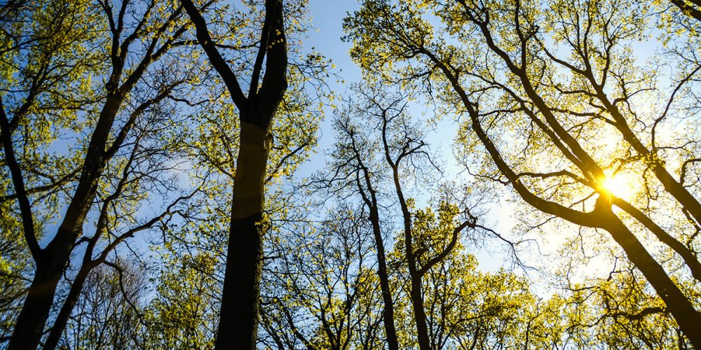 Crown Thinning Tree Services Leeds | West Yorkshire Tree Services