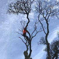 Deadwooding Tree Services Leeds | West Yorkshire Tree Services