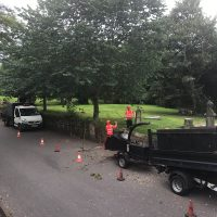 Tree Removal Leeds