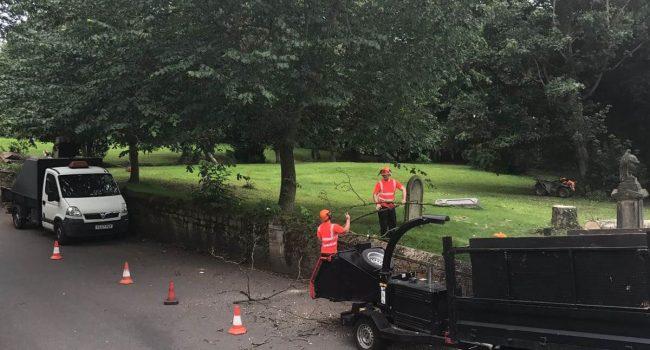 Tree Removal Leeds