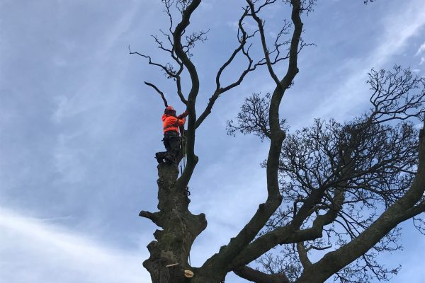 Tree Surgeon Leeds Felling Tree | West Yorkshire Tree Services