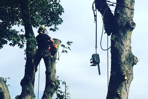 Tree Surgeons Leeds - West Yorkshire Tree Services