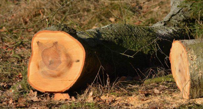 Tree Felling Leeds
