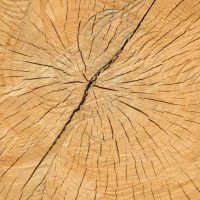 Stump Grinding Tree Services Leeds | West Yorkshire Tree Services