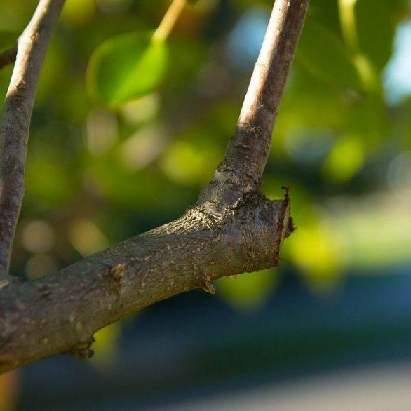 tree services leeds