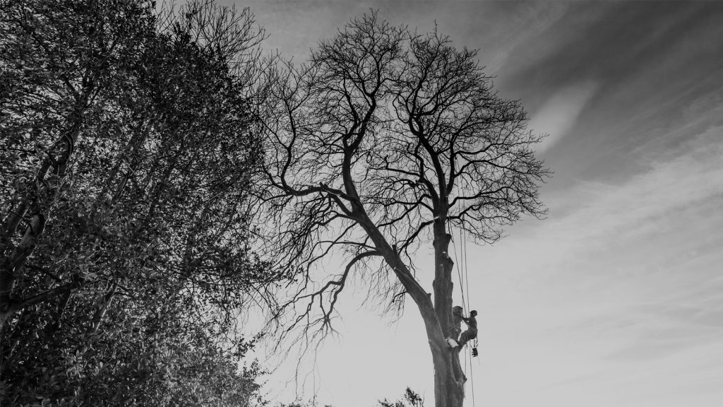 Leeds Tree Surgeons